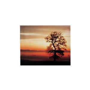 Photo of Desert and Tree Canvas 50X40 Home Miscellaneou