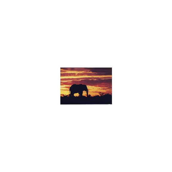 Sunset Elephant Printed Canvas 51x71cm