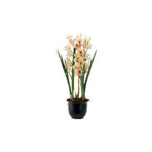 Photo of Real Touch Orchid In Black Planter Home Miscellaneou
