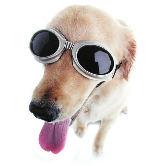 Firebox Doggles (ILS Large Champagne)