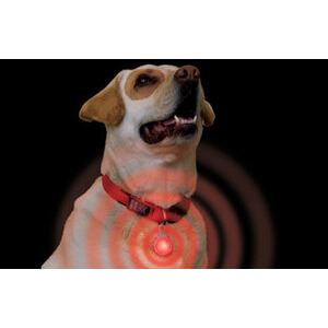 Photo of Spotlight Collar Light Gadget