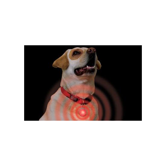 Spotlight Collar Light
