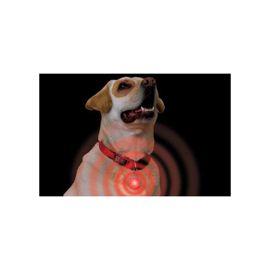 Spotlight Collar Light