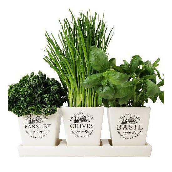 Windowsill Herb Planter: Taylors Windowsill Herb Pots Reviews