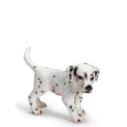 Dalmatian Puppy Reviews