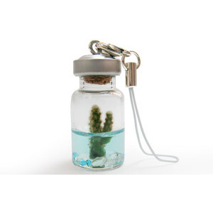 Photo of Miniature Pet Tree - A Real Plant On A Keyring Gadget