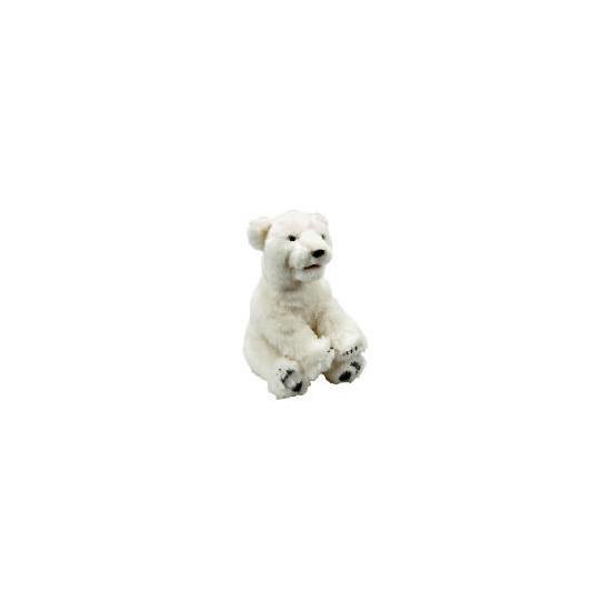 Alive Polar Bear