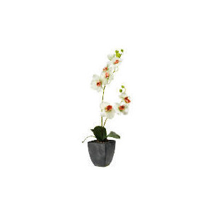 Photo of Green Orchid In Slate Square Pot Home Miscellaneou