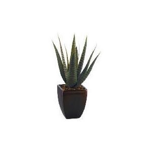 Photo of Aloe Vera In A Broze Pot Home Miscellaneou