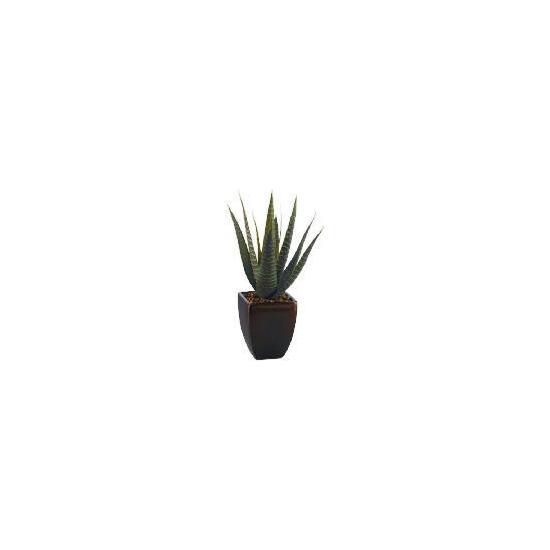 Aloe Vera In A Broze Pot