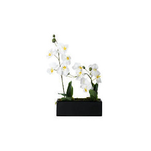 Photo of Cream Potted Orchid In Window Box Home Miscellaneou