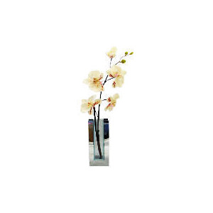 Photo of Cream Orchid In Mirrored Rectangular Vase Home Miscellaneou