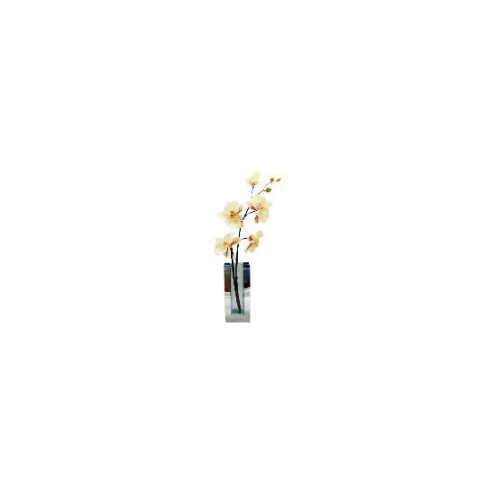Cream Orchid in Mirrored Rectangular Vase