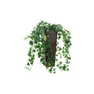 Photo of Mini Trailing Leaf Plant Pot Home Miscellaneou