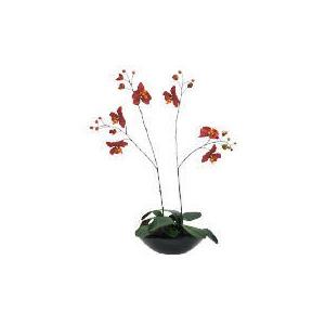 Photo of Orchid Garden Home Miscellaneou